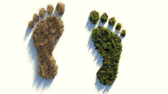 CO2-Bepreisung als Steuerungsinstrument für eine nachhaltige Wirtschaft